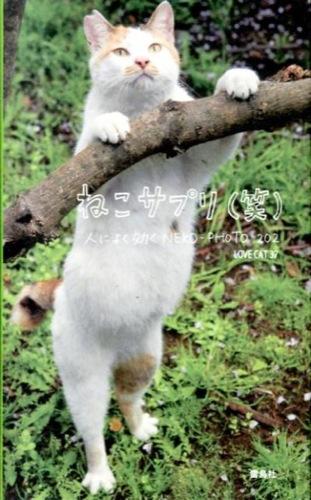 ねこサプリ〈笑〉 : 人によく効くNEKO-PHOTO202